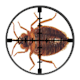 Targetted London Bed Bug Control