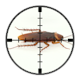 Targetted London Cockroach Control
