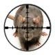 Targetted London Rat Control